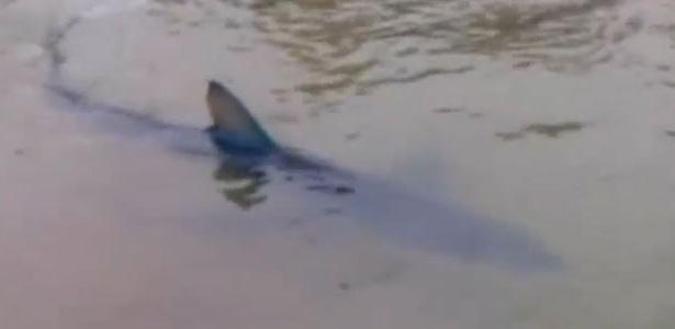 Tubarão é filmado por banhistas em praia britânica de Cornualha, no sudoeste da Inglaterra.