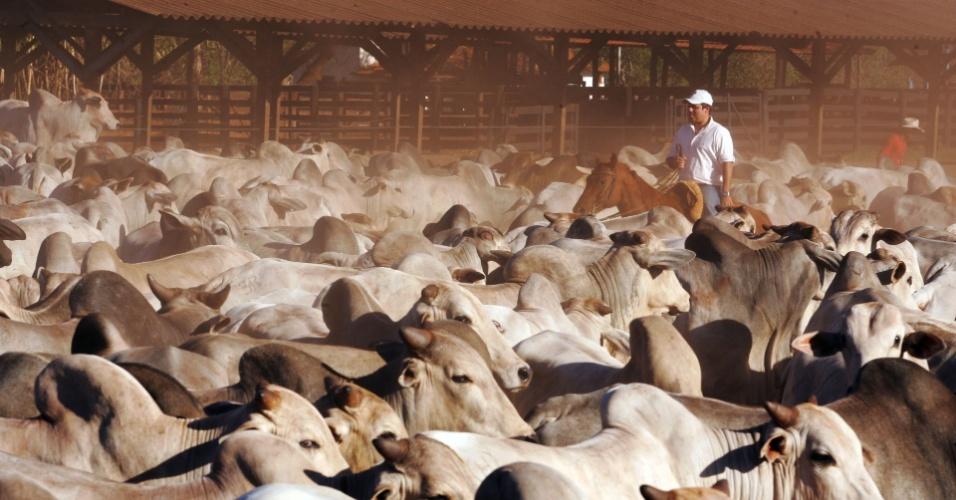Bois, gado agronegócio, agropecuária
