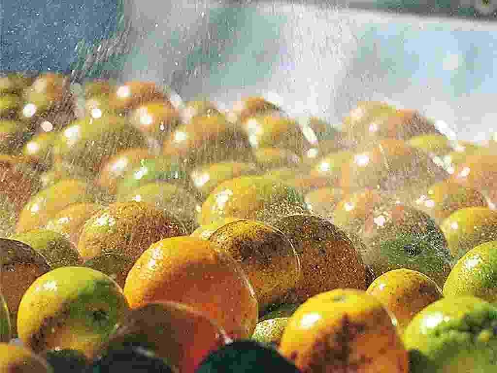 Mídia Indoor, wap: Laranja, fruta, suco, citrosuco, frutas cítricas, saúde, colheita, cultivo, produção - Bel Pedrosa/Folha Imagem